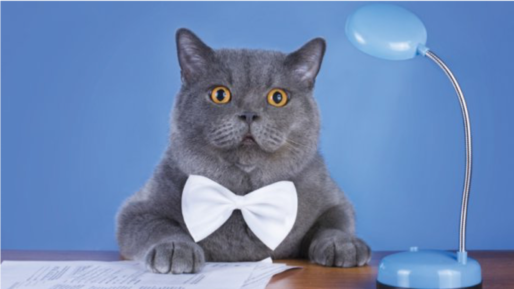 A gray cat sits in front of a blue wall at a desk. He's wearing a bowtie, and he has papers in front of him to work on. A blue desk lamp sits next to him.
